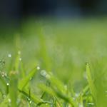 Après la pluie… Solid'elles