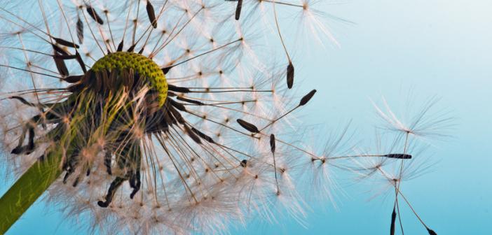 Allergies - Mid&Plus