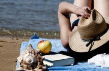 Nos romans de l'été