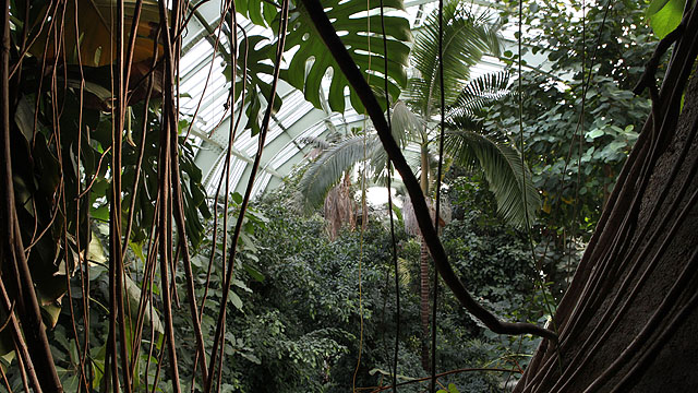 Tropical Rainforest Glasshouse