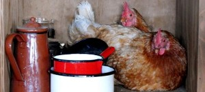 898316-chicken_kitchen_Hayley-Battison_Lochhouses