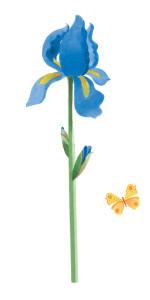 ©Capture Fragonard-Iris-Midetplus