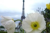 Fleurs de province