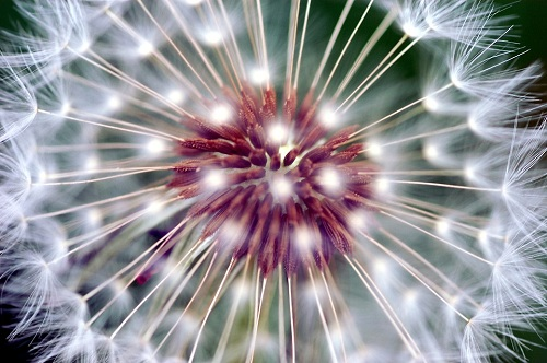 ©Pixabay-Allergies particulières-Edito-Mid&plus
