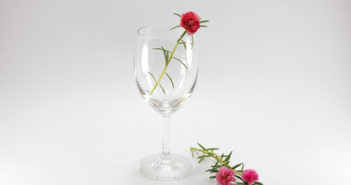 Plants and Flower in wine glass, it stays on gray background, I want to present wine glass in other style, This plant is colorful, I took this with high key or low key and selective focus.