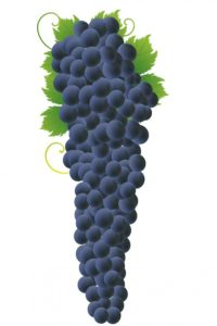 grapes-316869_960_720