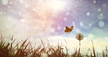 ©Access Consciousness - Mid&Plus