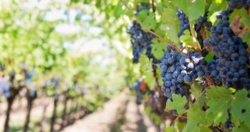 ©Pixabay purple-grapes-553462_960_720
