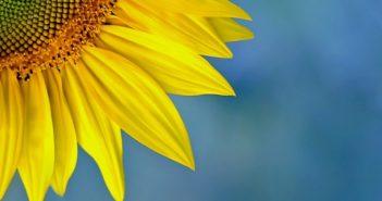 ©Du soleil dans votre vie - Mid&Plus