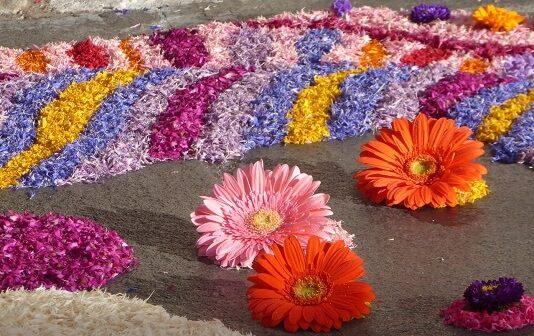 ©Aux couleurs des fleurs - Mid&Plus