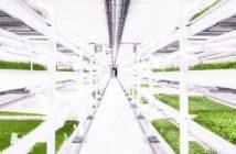 Potager souterrain : l'agriculture urbaine de demain