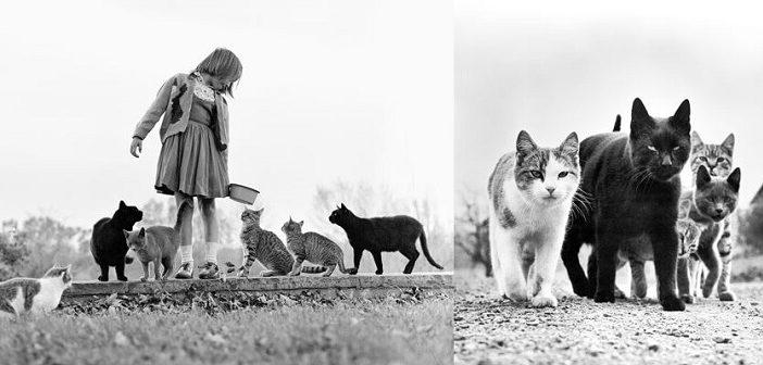©Taschen - Cats - Walter Chandoha - www.taschen.com