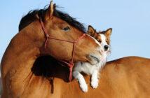 À cheval sur ses principes