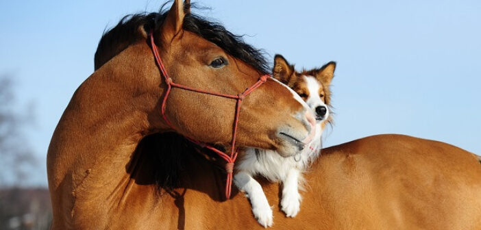 ©AdobeStock_47461305 - A cheval sur ses principes