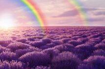 Le violet: dernière note de l'arc-en-ciel…