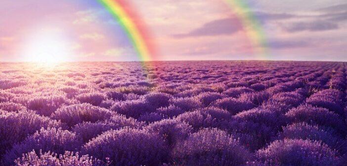 ©AdobeStock_217619727 - Le violet