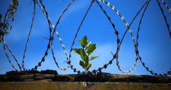 ©Pixabay freedom-1125539_1920 - Visiteur de prison